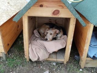 construction niche pour chien 8 messages. Black Bedroom Furniture Sets. Home Design Ideas