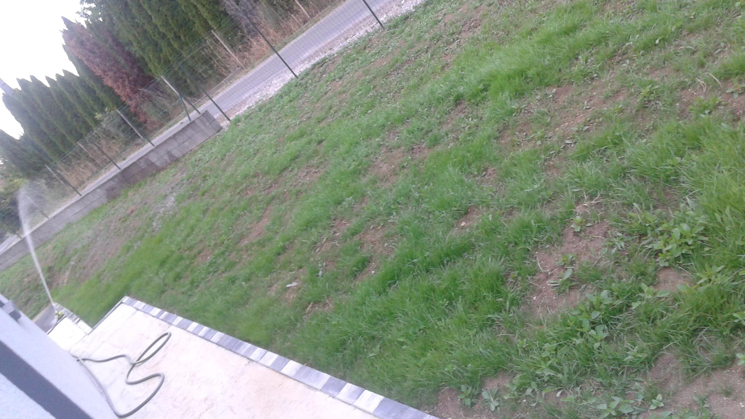 jeune gazon envahi par mauvaise herbe que faire 86 messages page 2. Black Bedroom Furniture Sets. Home Design Ideas