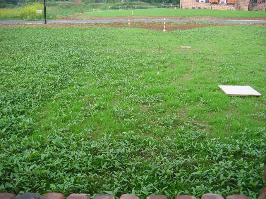 jeune gazon envahi par mauvaise herbe ! que faire ? - 86 messages